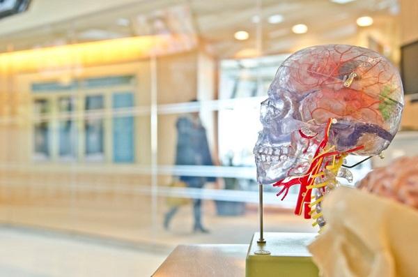 三つ子の魂百までは脳科学的で証明されている