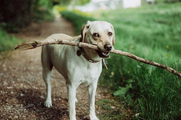 犬も歩けば棒に当たるの意味
