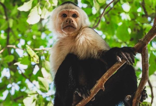 猿も木から落ちる