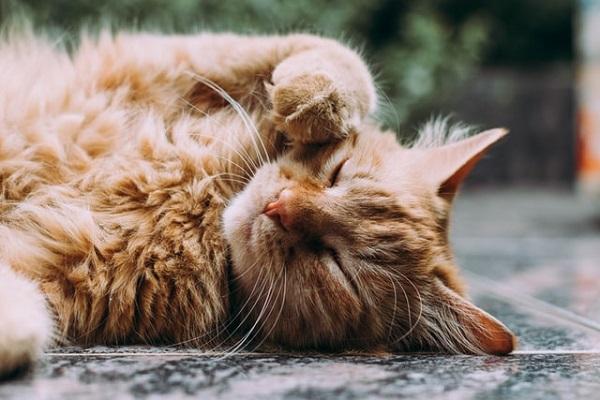 猫に小判の意味